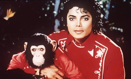 شامپانزه ای به نام بابلز؛ بهترین دوست مایکل